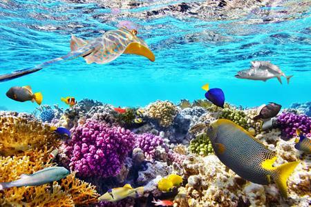 Participate in Tourism Australia's new marine marketing campaign